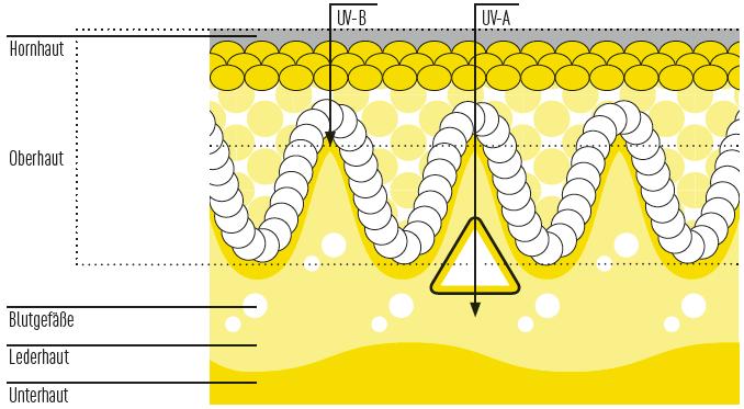Eindringen von UV-Strahlen in die Haut